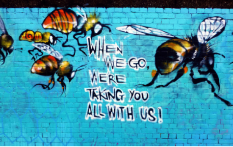 Bees: beautiful bugs or strange stingers?
