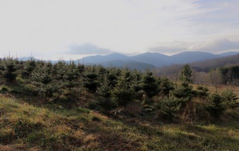 Christmas Trees: History in the making