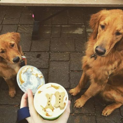 Topped with tempting peanut butter and dog biscuits, two goldens beg for a taste of Fresh's dog-friendly sundae. Fresh offers a wide variety of unique flavors made antibiotic-free, pesticide-free, and hormone-free, sourced from local NC farms.
