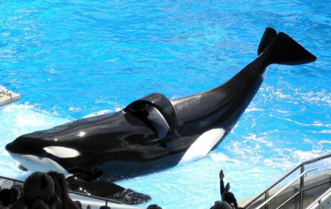 The other side of Sea World