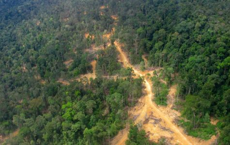 Running through the Amazon Rainforest, illegal logging roads are used to transport logs that benefit the lumber industry. Recent agriculture and lumber industry activity has resulted in the depletion of the Amazon Rainforest, leaving the world at risk for climate change.