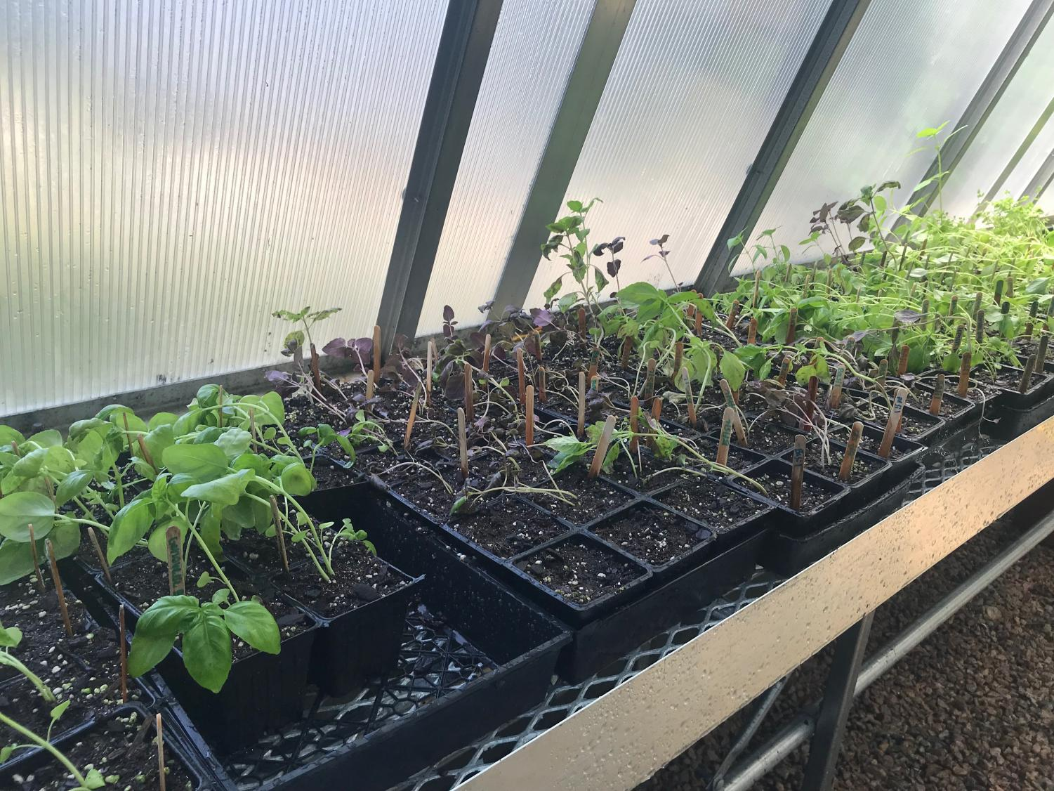 Using Millbrook's resources to their advantage, students grow herbs and other plants in our greenhouse. This gives them the opportunity to learn how to correctly grow food and practice environmentally friendly actions.