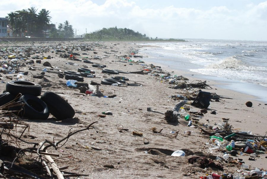 Lining+the+beaches+with+discarded+waste%2C+the+man-made+destruction+slowly+begins+to+seep+its+way+into+the+ocean.+If+these+disposable+plastic+products+end+up+in+the+ocean%2C+they+will+have+destructive+effects+on+the+health+of+the+ocean+itself+and+the+health+of+the+marine+organisms+that+live+in+the+ecosystem.+