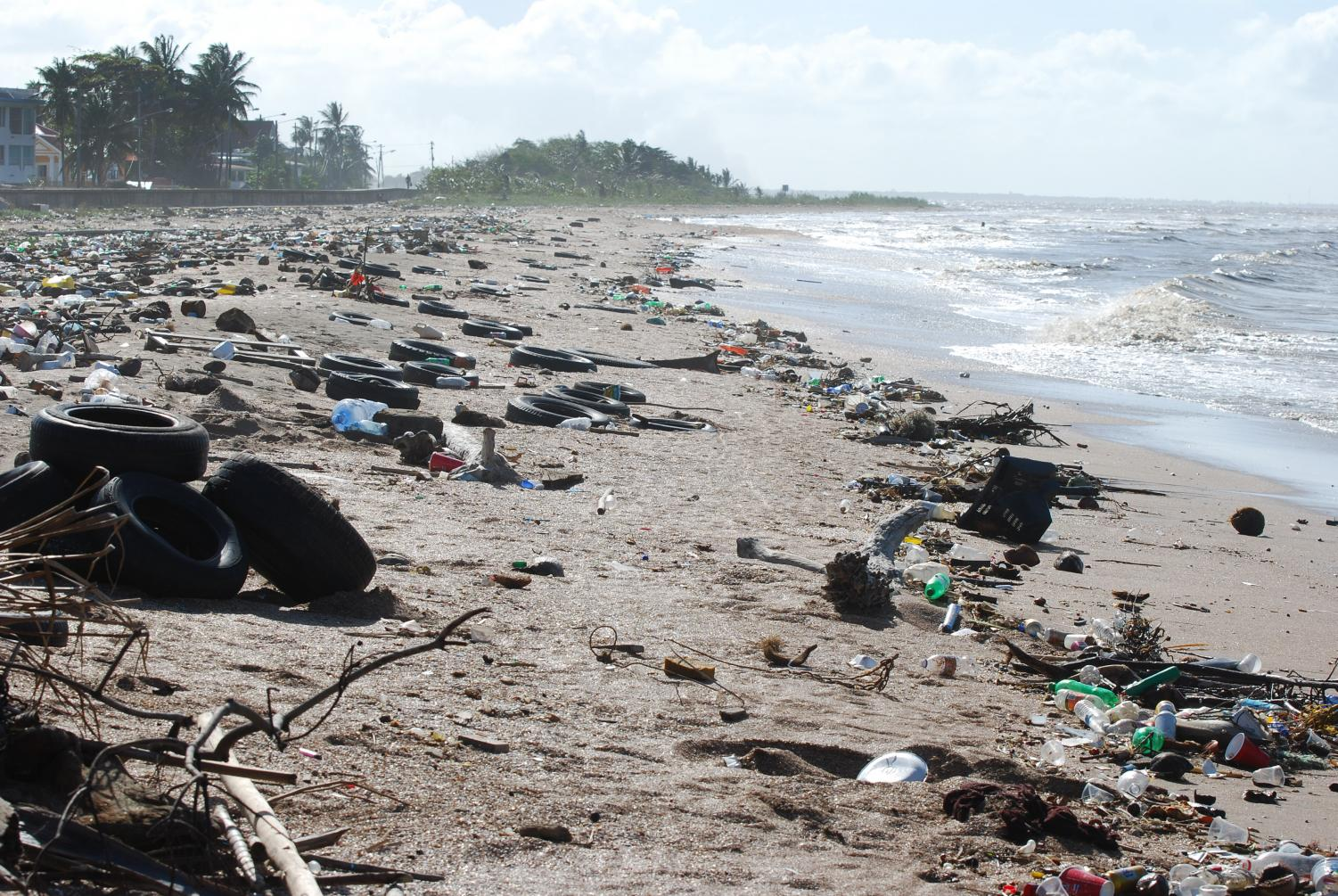 Lining the beaches with discarded waste, the man-made destruction slowly begins to seep its way into the ocean. If these disposable plastic products end up in the ocean, they will have destructive effects on the health of the ocean itself and the health of the marine organisms that live in the ecosystem.