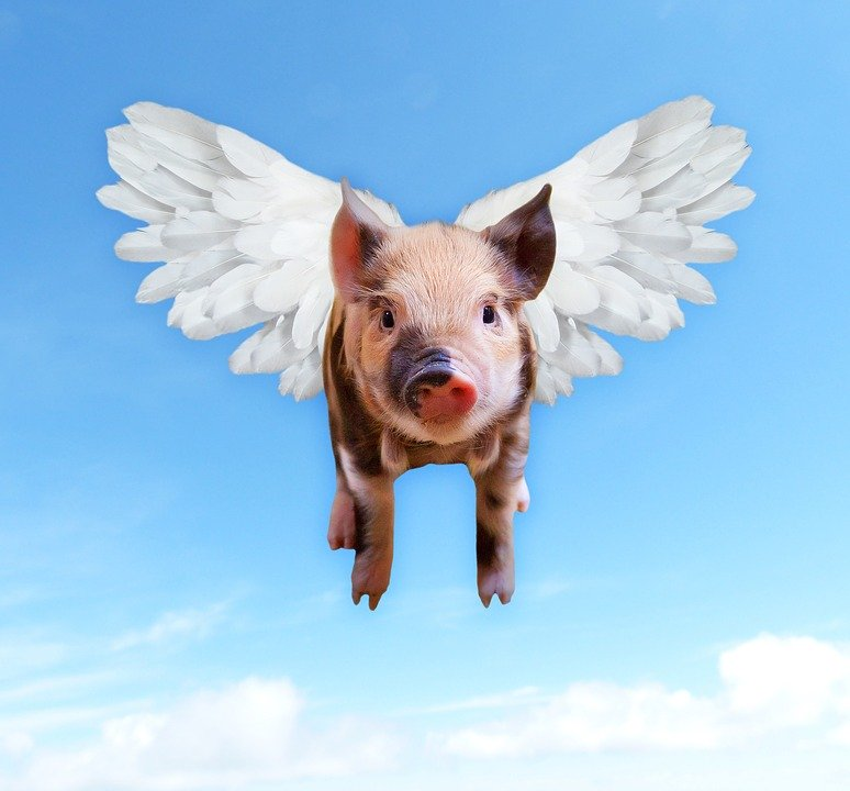 """Flying with wings on its back, this pig displays the idiom, """"I'll do it when pigs fly!"""" Idioms are one of the strangest things in the English language; read on to find out their origins!"""