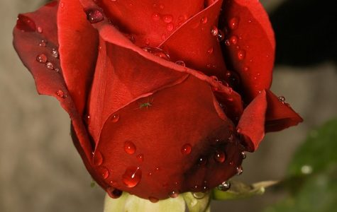 To express interest, Clare Crawley hands out roses to the men she would like to keep around and get to know better. Receiving a rose indicates that contestants are safe for the next week and have more time to build a connection with the Bachelorette.