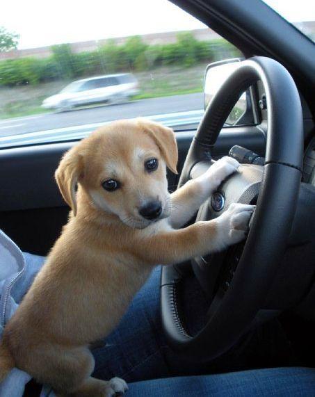 Quiz: Meet your dog breed match!